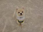 20145612276.JPGのサムネイル画像