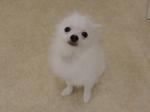 2014916124251.jpgのサムネイル画像